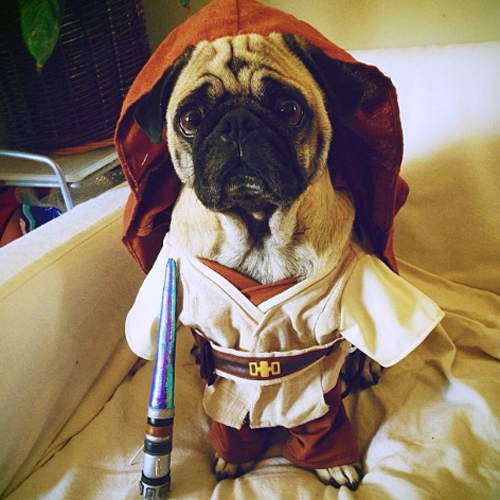 pug%20star%20wars%20obi%20wan%20costume